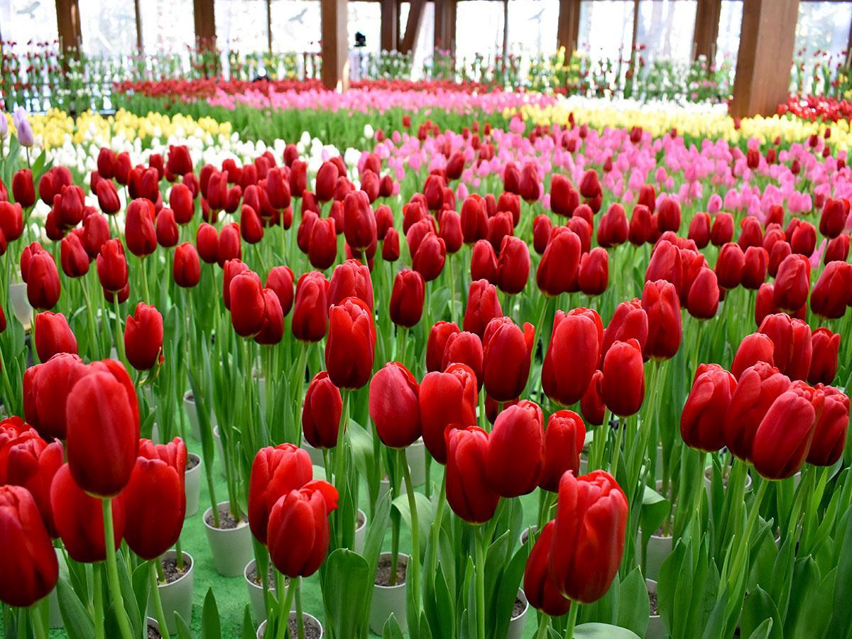 カラフルなチューリップがホール内を彩る。「一足先に春を感じてもらえれば」