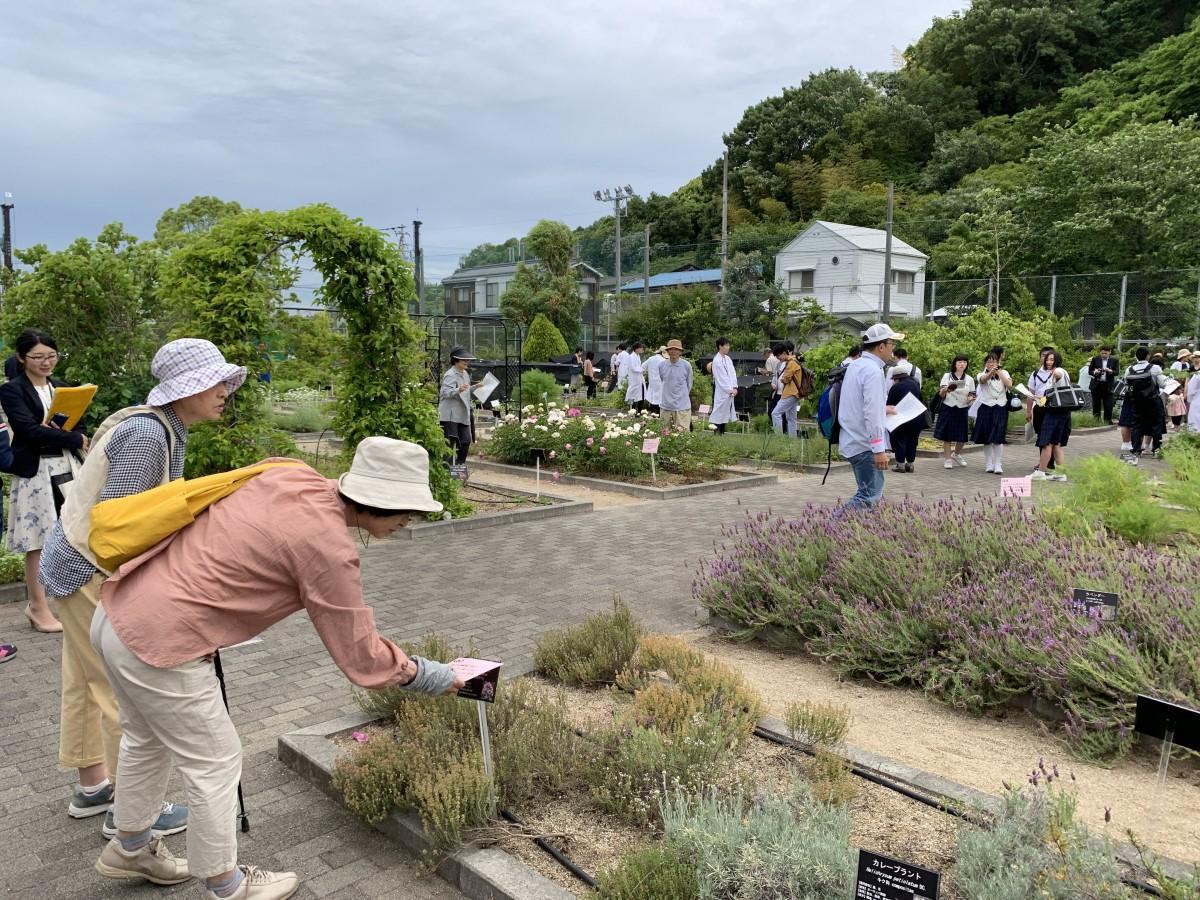 園内を回り「薬草クイズ」を楽しむ参加者