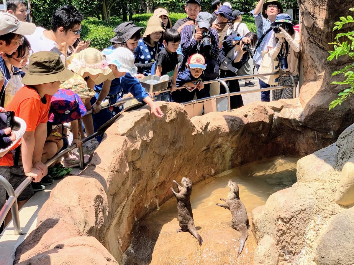 とべ動物園コツメカワウソ舎で「世界カワウソの日」のガイドインベント