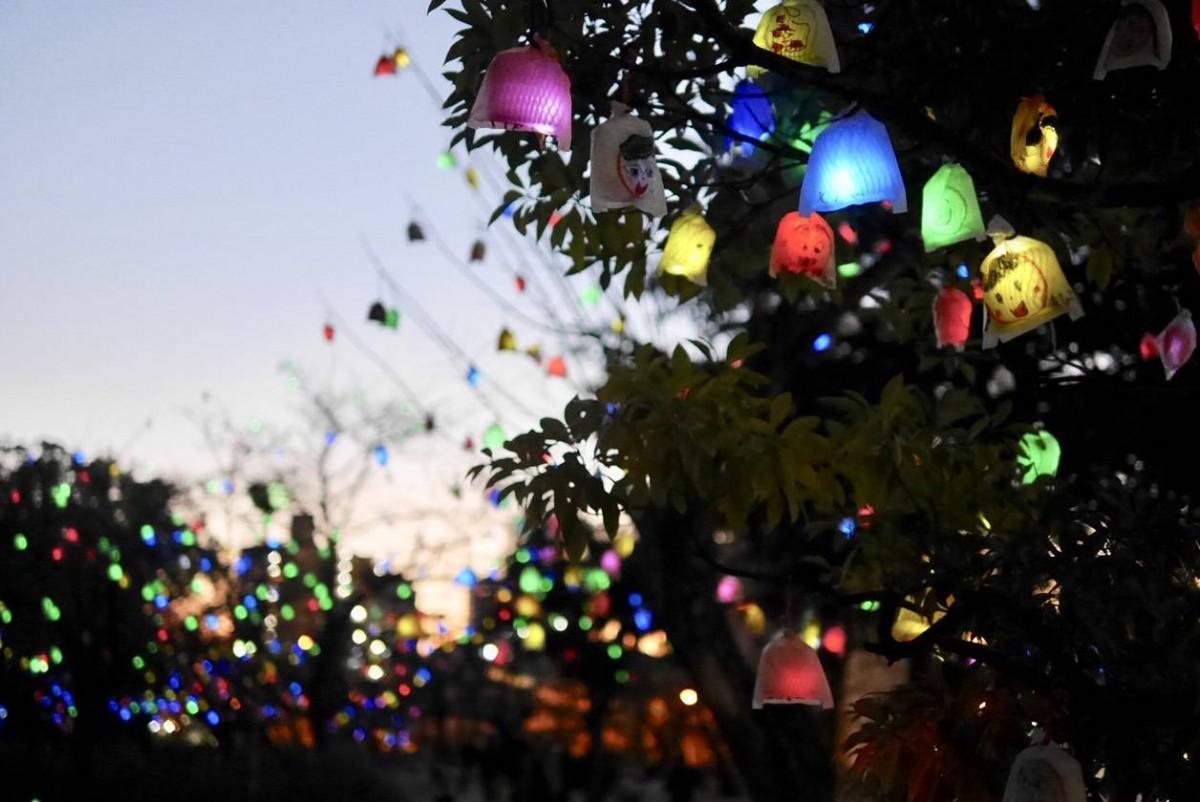 道後公園内に飾られる色とりどりの「ひかりの実」