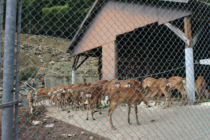 「栗の里公園」で飼育している鹿