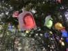 松山市・道後公園で「ひかりの実」ライトアップ 手作りイルミネーション5000個を点灯