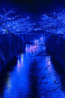 青く光り輝く目黒川