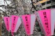 目黒川の桜がライトアップ ぼんぼり4000個点灯