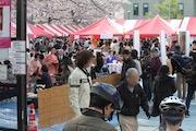 目黒で「目黒イーストエリア桜まつり」 目黒川のソメイヨシノ800本が週末見ごろ