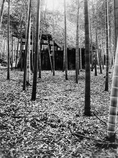 昭和3年頃の碑文谷の竹林