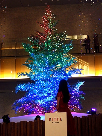 KITTE名古屋にクリスマスツリー 高さ7メートル、本物のモミの木使い