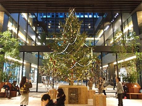 生のモミの木に来店客のチェキを飾った「クリスマスチェキツリー」