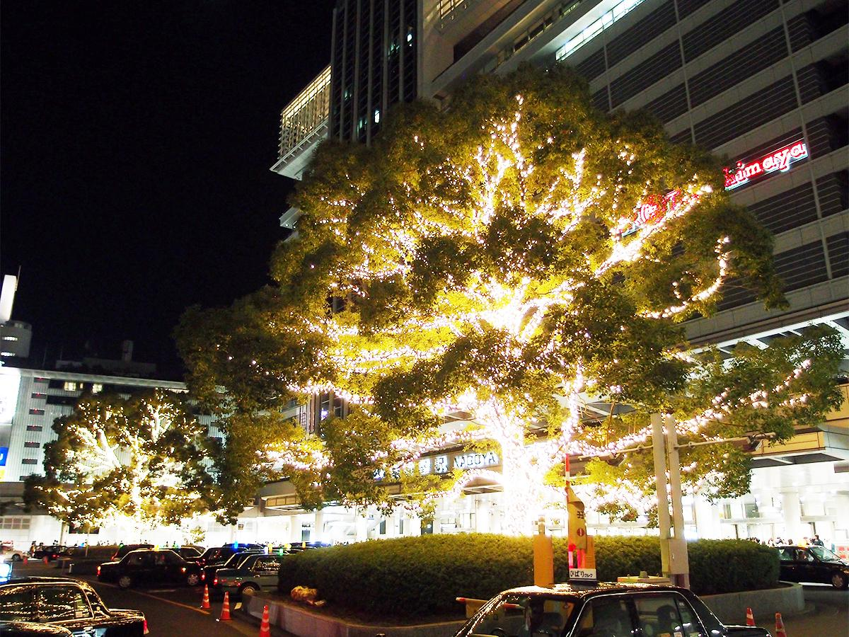 「光るブロッコリー」と例えられ話題を集める、ライトアップされた東口タクシー乗り場の大きな樹木