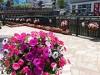 名古屋・堀川沿いで「フラワーフェスティバル」 最終日はマルシェも