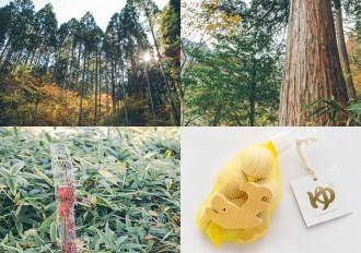 名古屋城が本丸御殿復元でゆかりある中津川のオンラインツアー 森づくりと木の流通