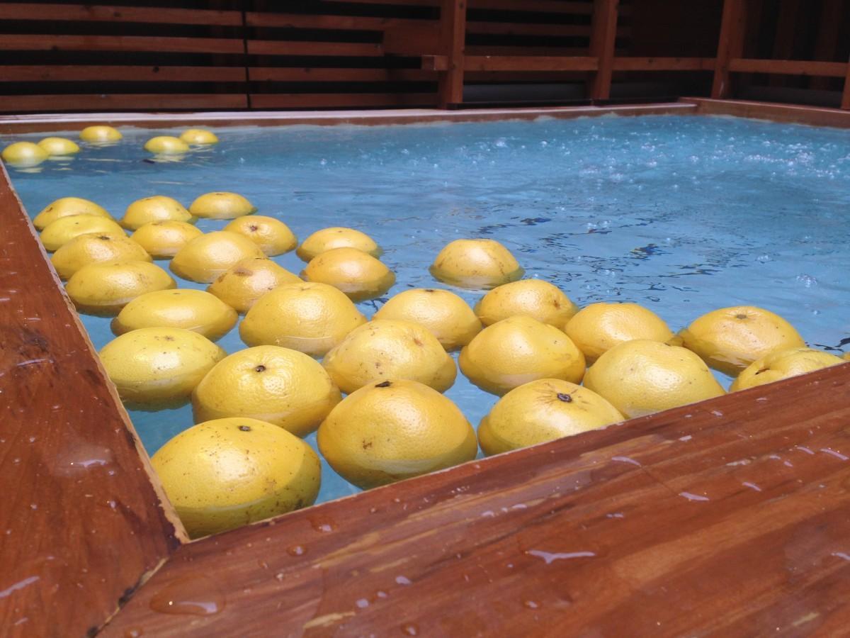 フロリダ産グレープフルーツを丸ごと湯舟に浮かべた「生グレープフルーツ湯」(イメージ)