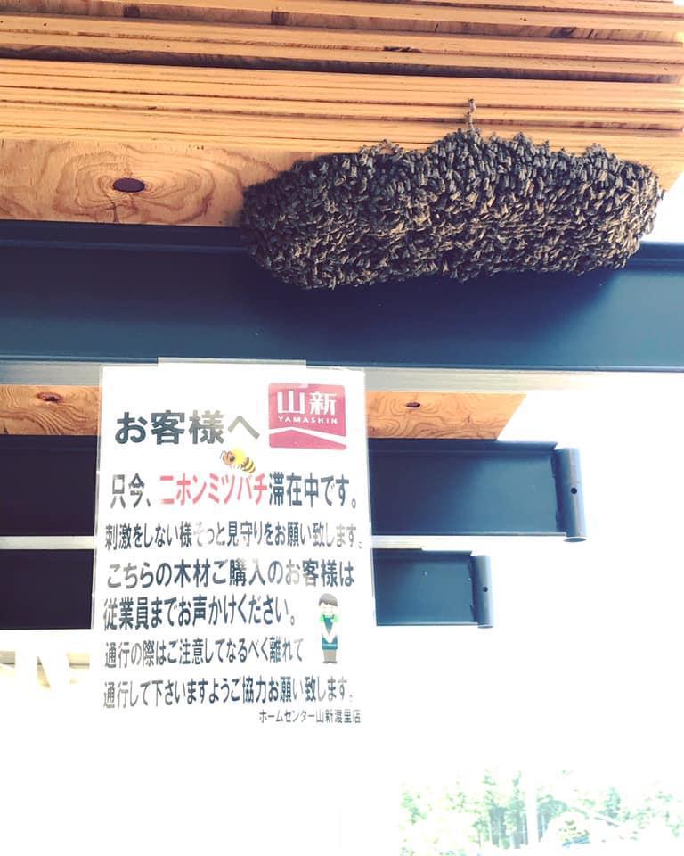 一カ所に集まったニホンミツバチと山新・渡里店で掲示した張り紙(写真提供=西村智訓さん)