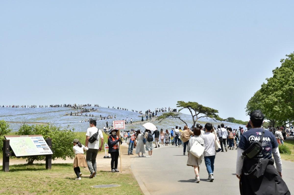 5月4日の「みはらしの丘」利用状況(写真提供=国営ひたち海浜公園)