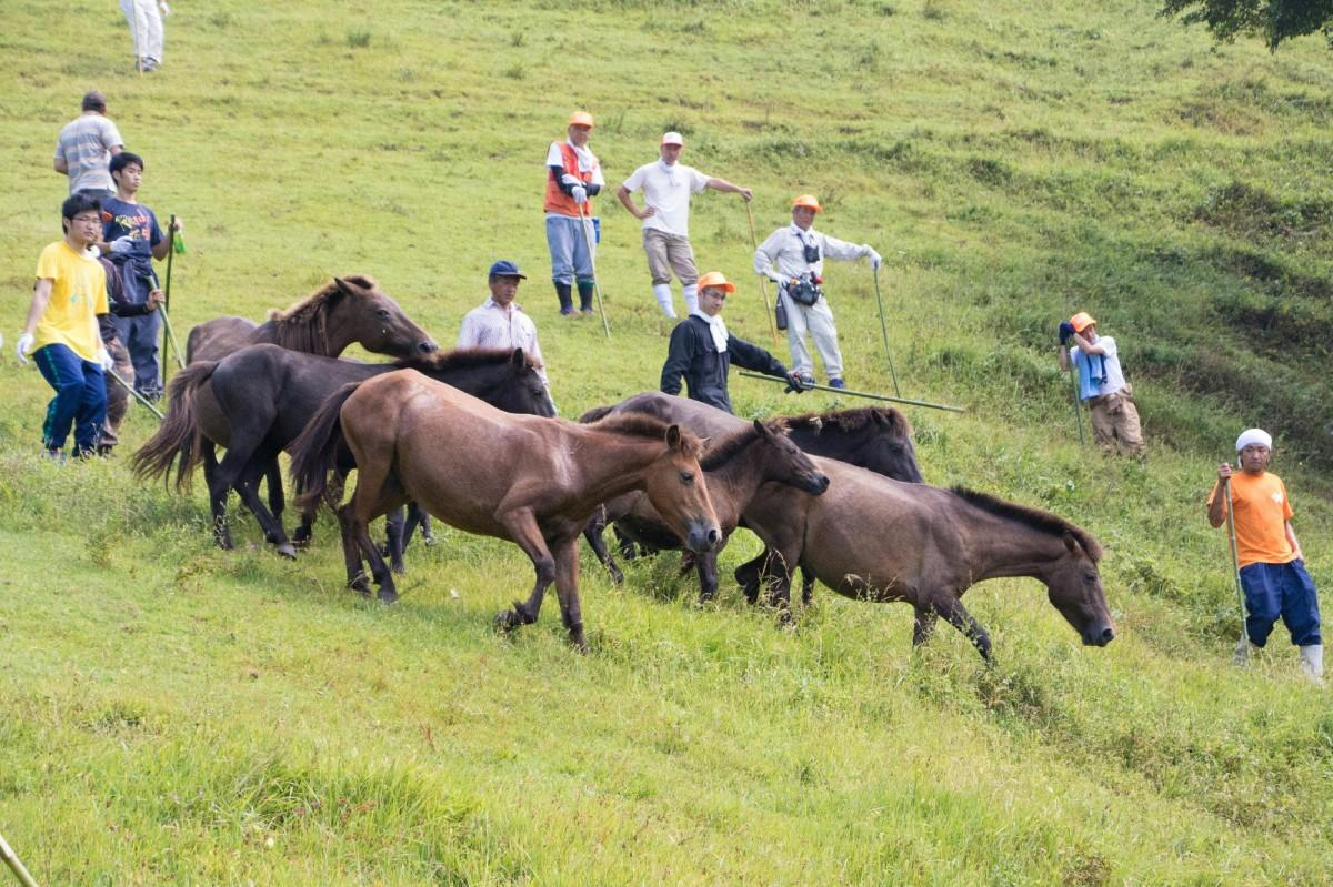 付かず離れずじわじわと馬を道路へ追い出す
