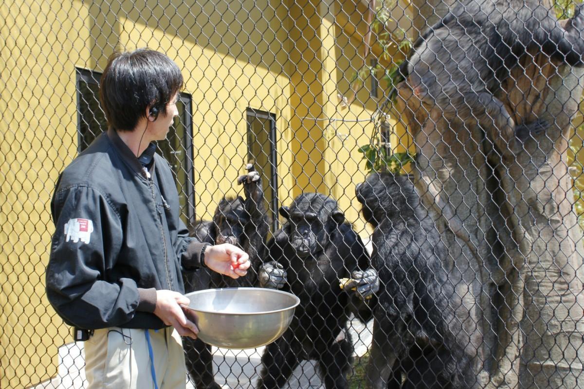 好物の果物に群がる3頭のチンパンジー