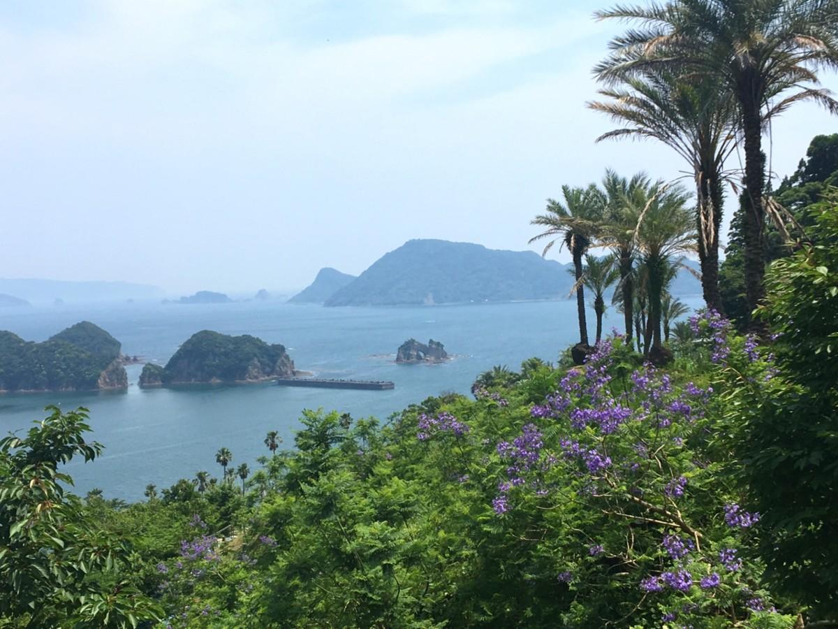 南郷の青い海と見頃となったジャカランダの花