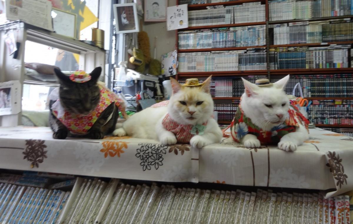 (画像右から)看板猫のチビ、ピュア、ココア