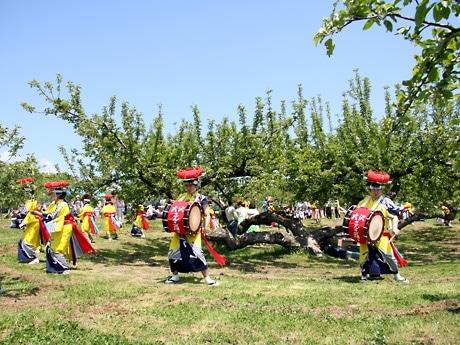 晴れ渡った空の下で披露された「大沢さんさ踊り保存会」の踊り。背景のりんごの木は樹齢約100年。今年の開花は早く、すでに花は散っていた