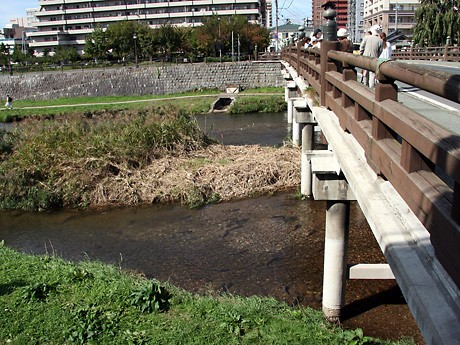上の橋のたもとに見られるサケの黒い魚影(10月10日に撮影)