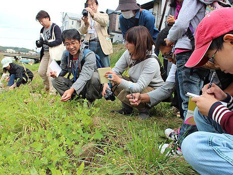 中津川沿いで秋の雑草について学ぶ