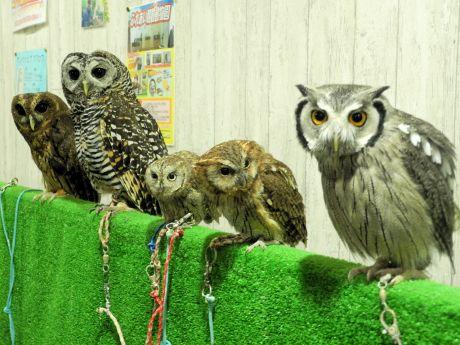 フクロウも移動動物園の人気者「みんなと会えるのを待ってるよ」