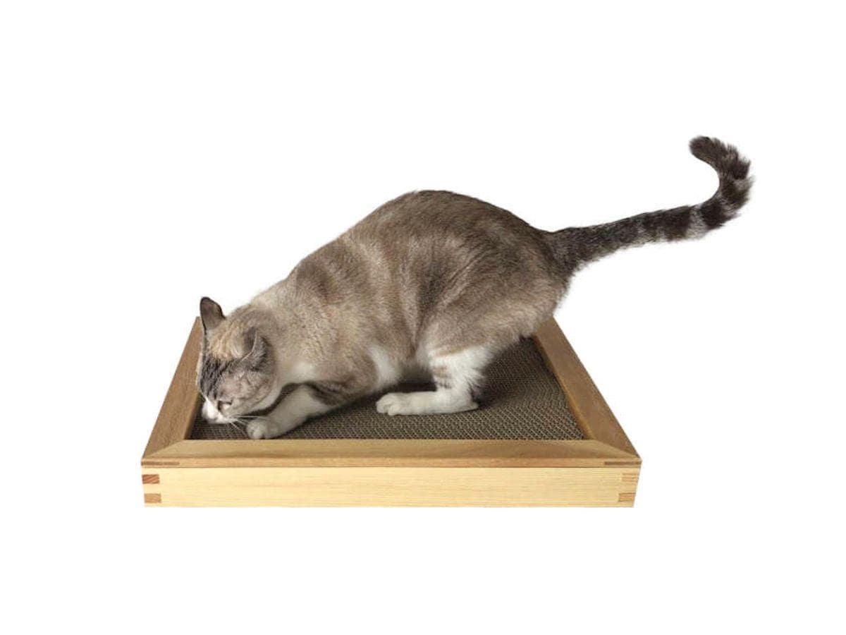 「スクラッチZEN」で爪をとぐ猫。ぐらつかず安定感のある使い心地が特徴。