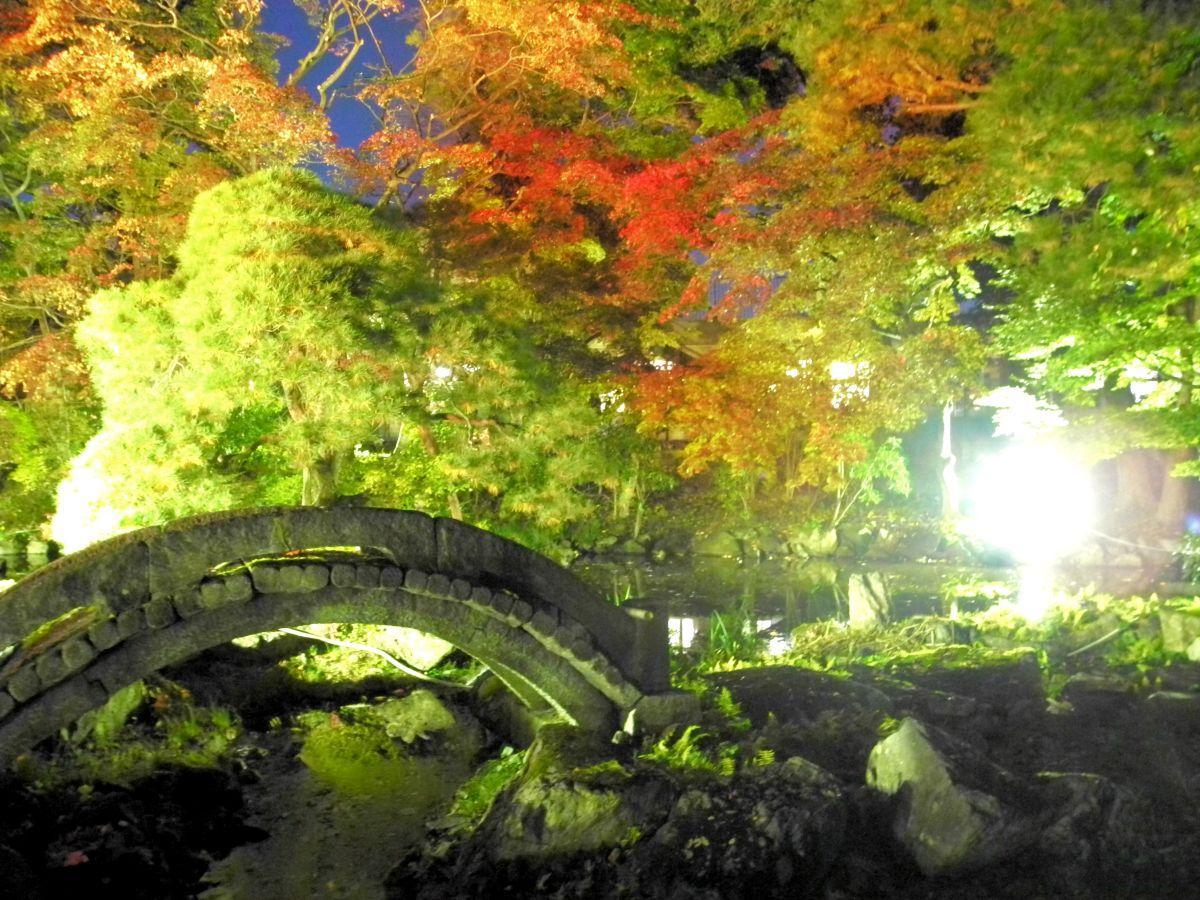 色づき始めた葉がライトアップされる幻想的な風景