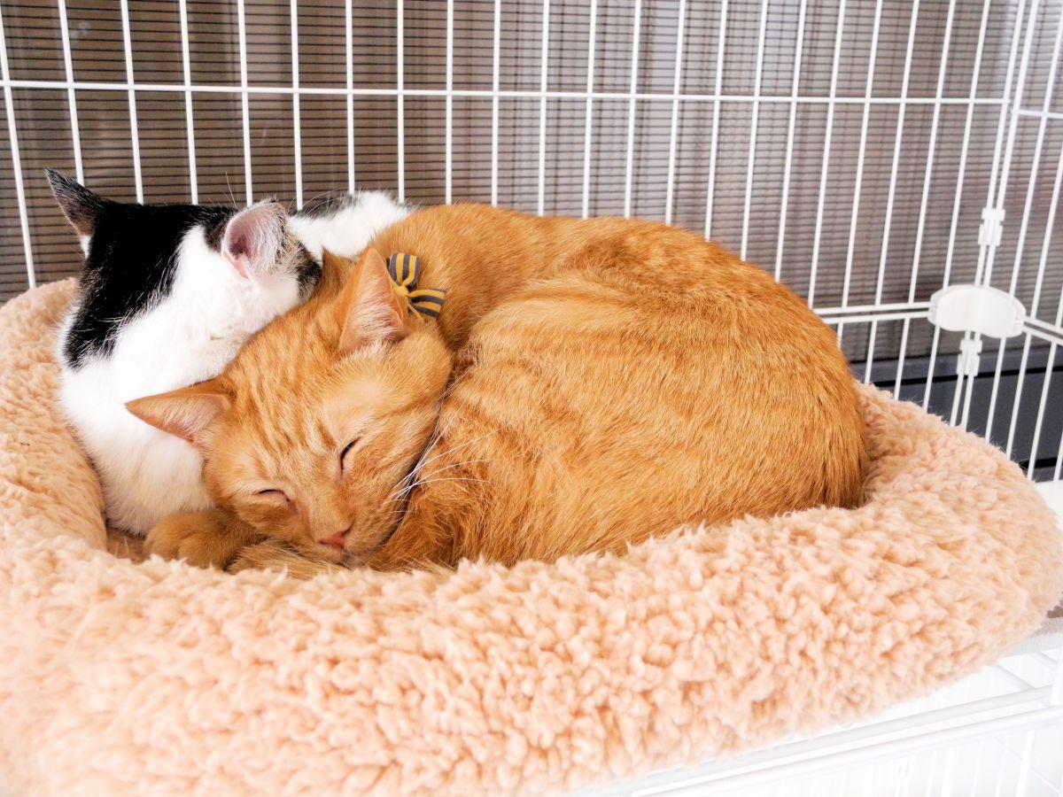 5階のキャットシェルターで新しい飼い主を待つ猫