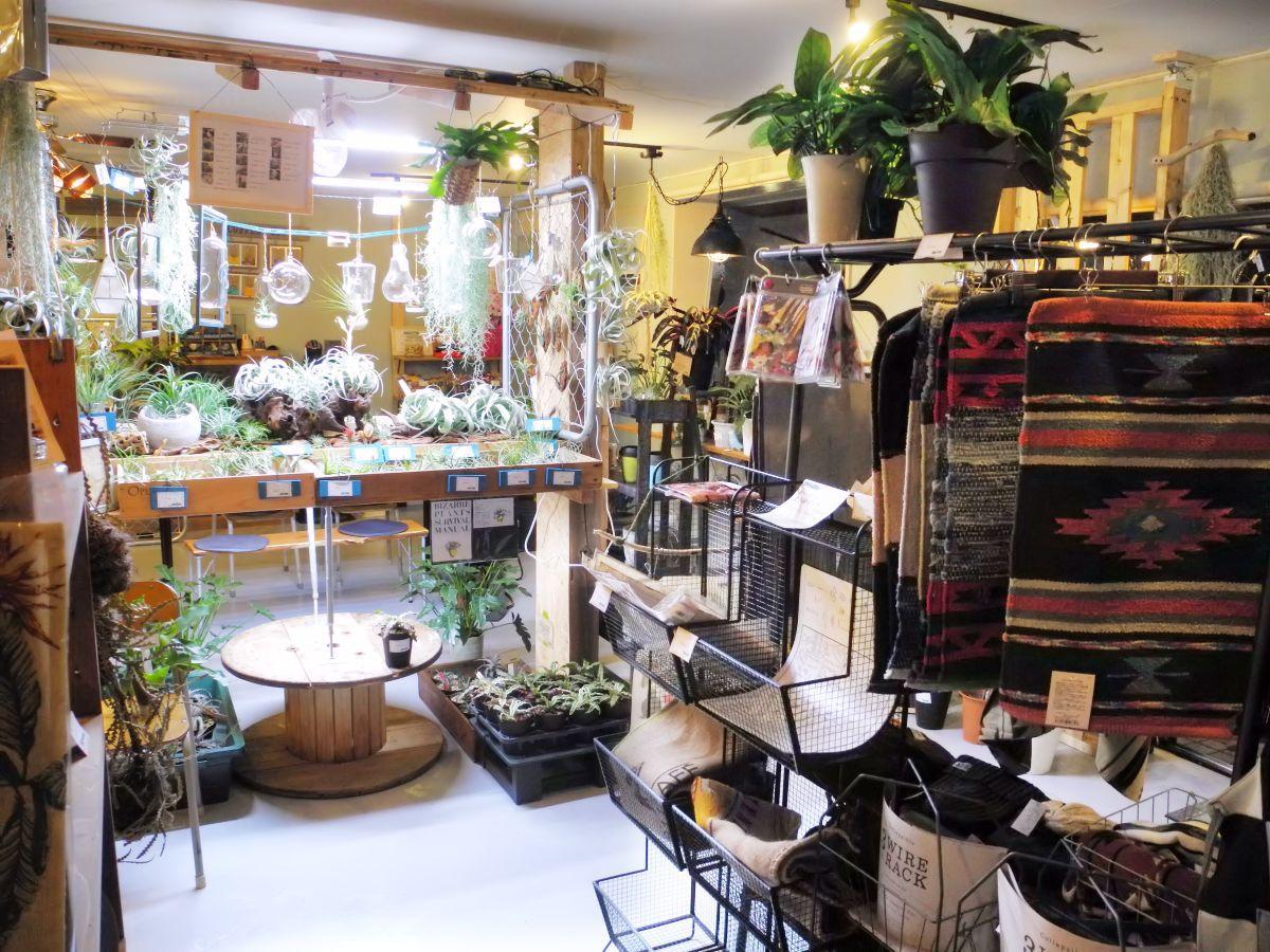 エアプランツが並ぶ大きな棚が目を引く店内。さまざまな雑貨と植物も並ぶ。