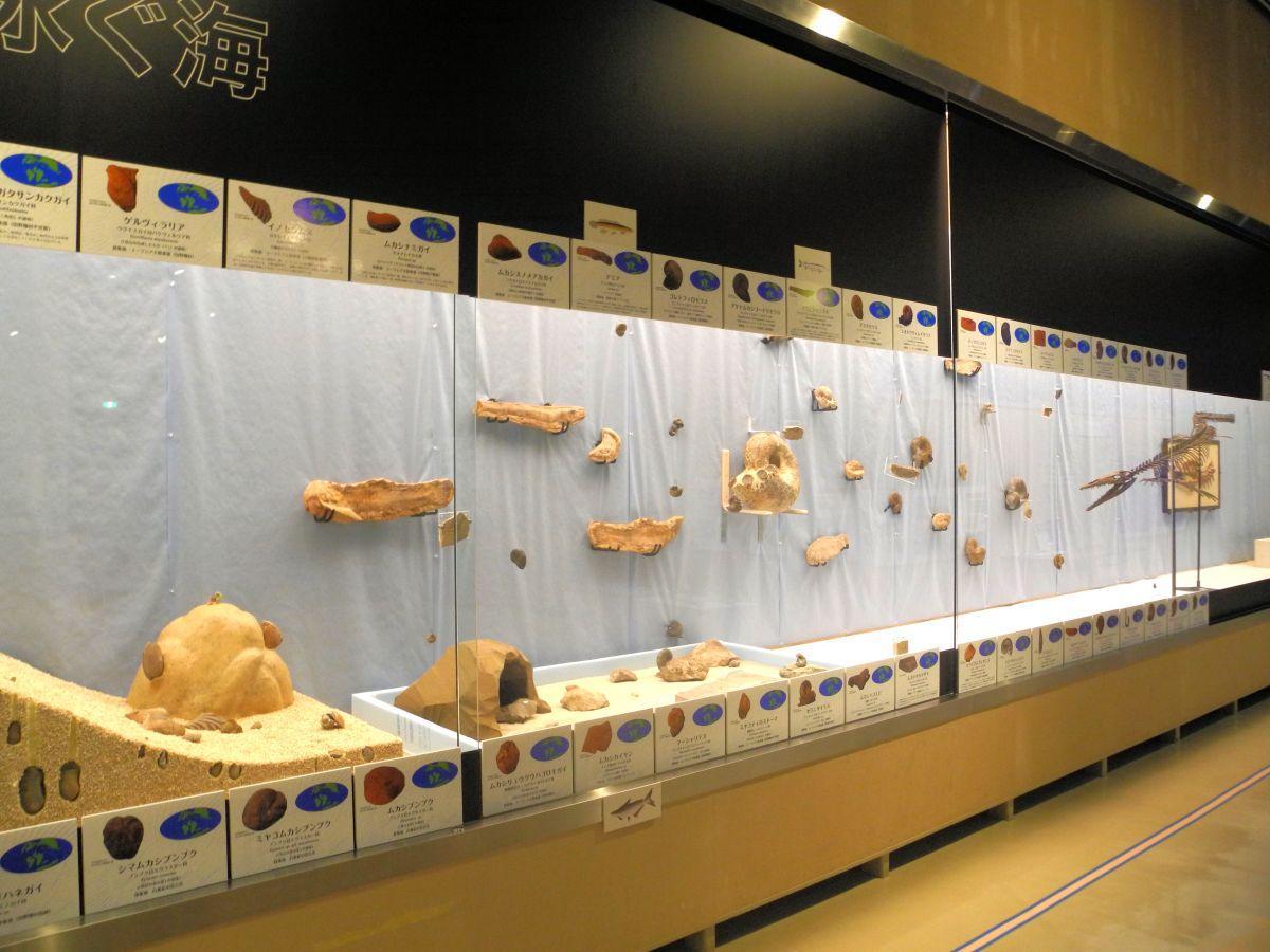水族館の水槽をイメージして作られた展示。化石の生き物が水の中を泳いでいるように見える