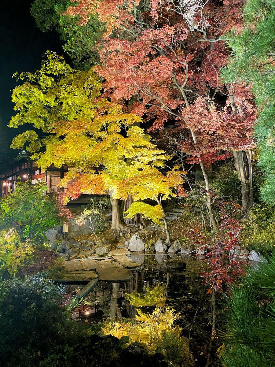 赤や黄色に染まった木々の葉が光に照らされて幻想的に輝く