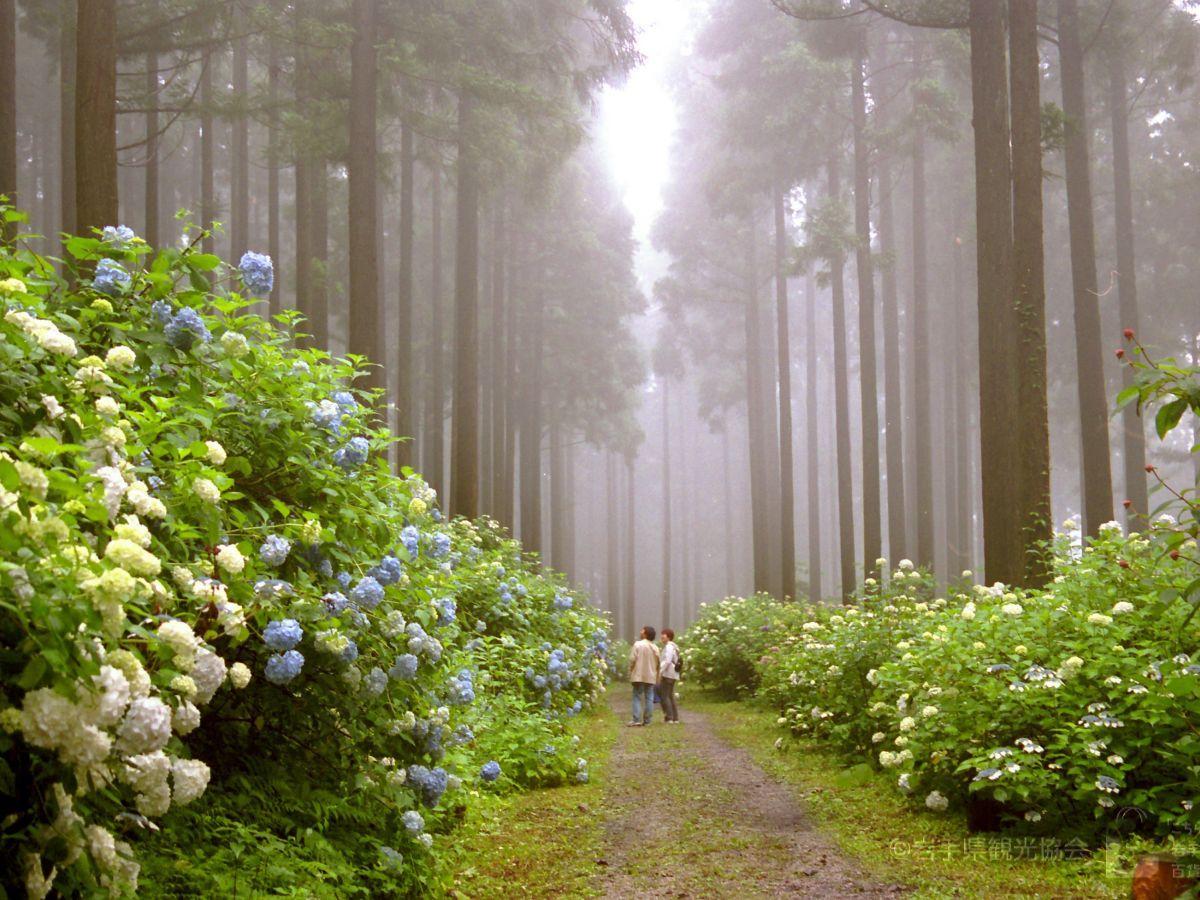 イメージ例として挙げられている一関市のあじさい園