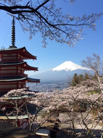 新倉山浅間公園からの富士山と桜(2014年4月15日撮影)