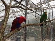 富士花鳥園、「ロリキートランディング」と「ふくろうの森」がリニューアル