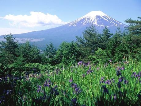 富士山とアヤメ