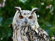 富士花鳥園のナイト企画、今年も 世界のフクロウを観察、解説も
