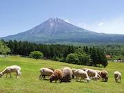 まかいの牧場で「ひつじ交換式」 姉妹牧場「羊の雲の丘」と15周年記念で