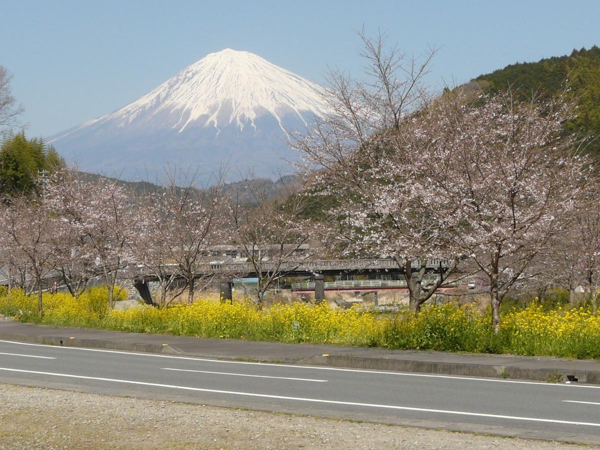 稲瀬川沿いから眺めることができる桜と菜の花と富士山の様子