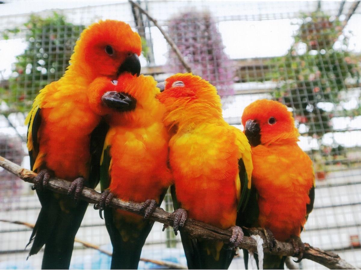 富士花鳥園の鳥のファミリー
