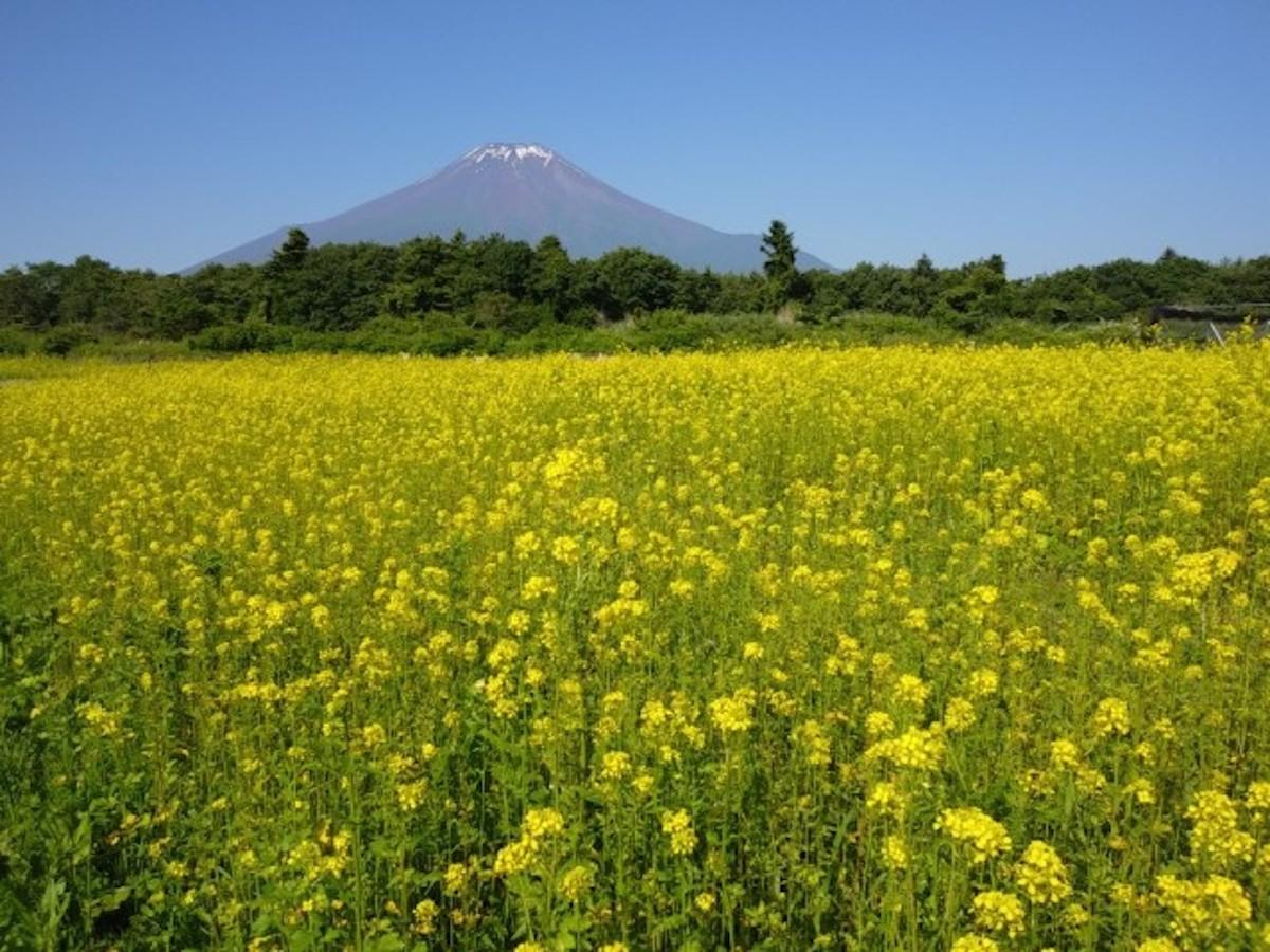 花の都公園のキカラシと富士山