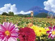 花畑と富士山 写真提供=ぐりんぱ