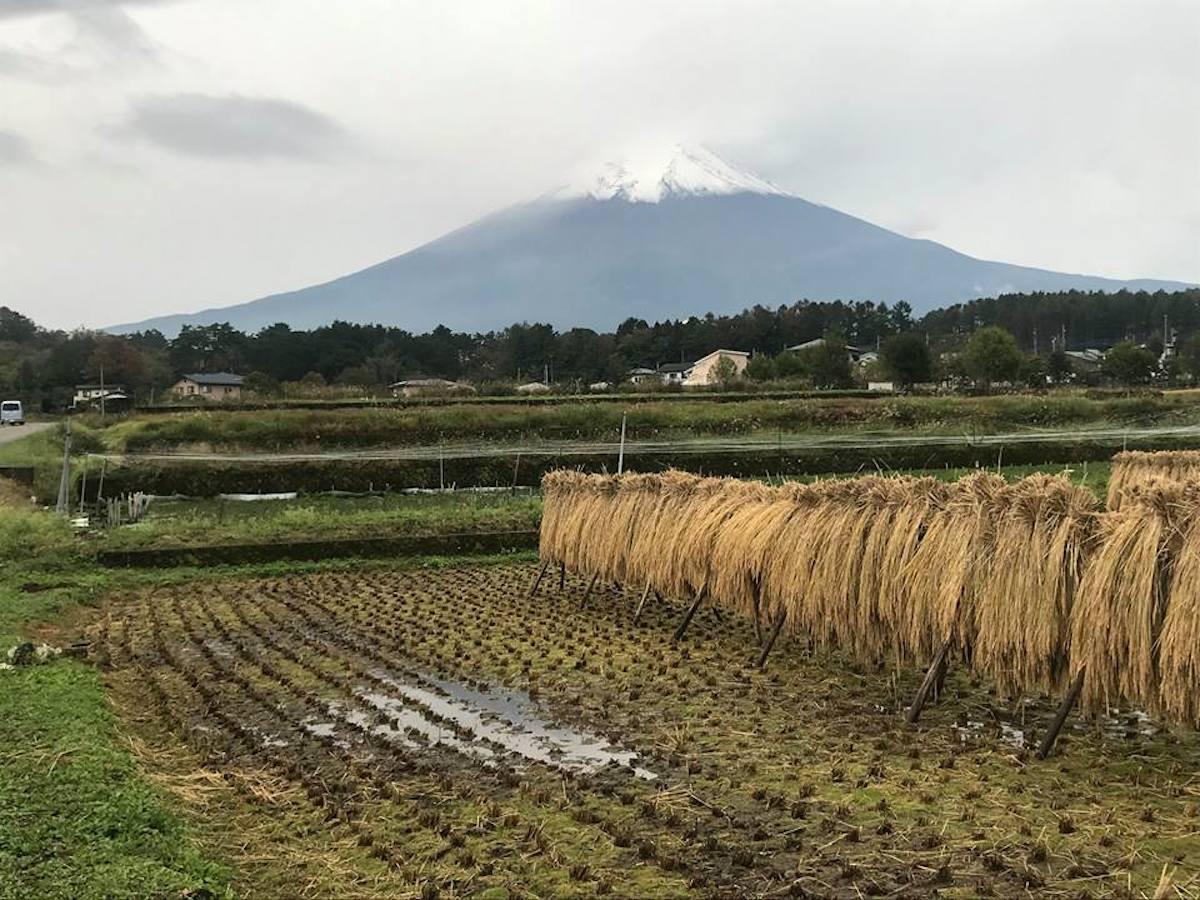 農村公園付近からの富士山