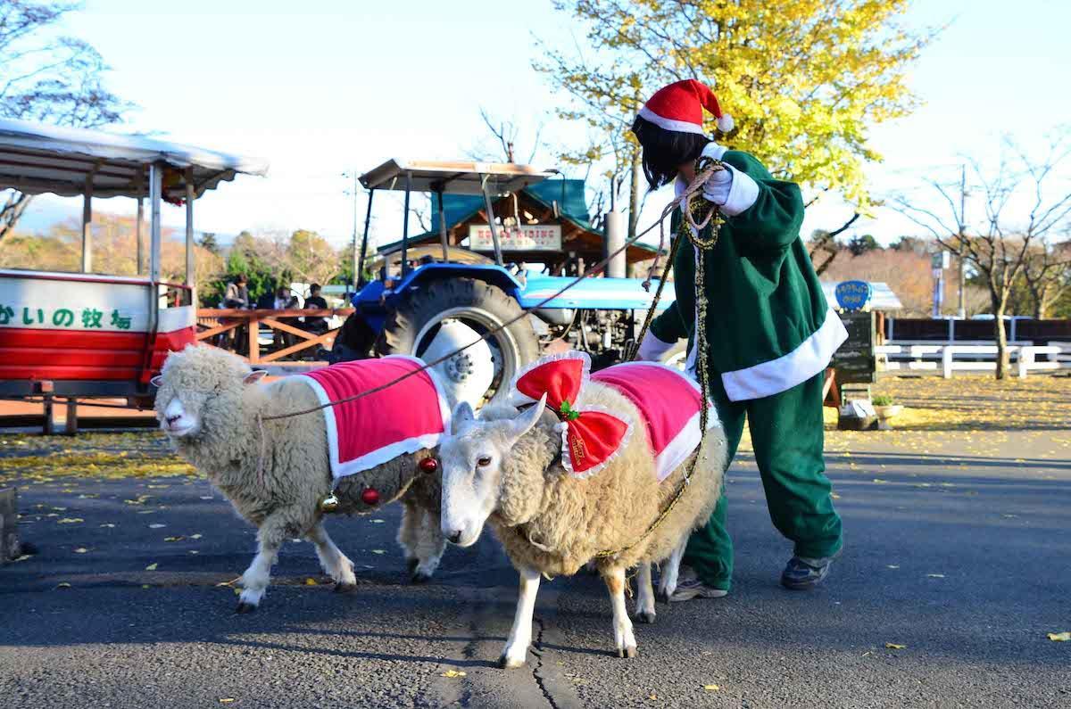 クリスマス衣装の動物