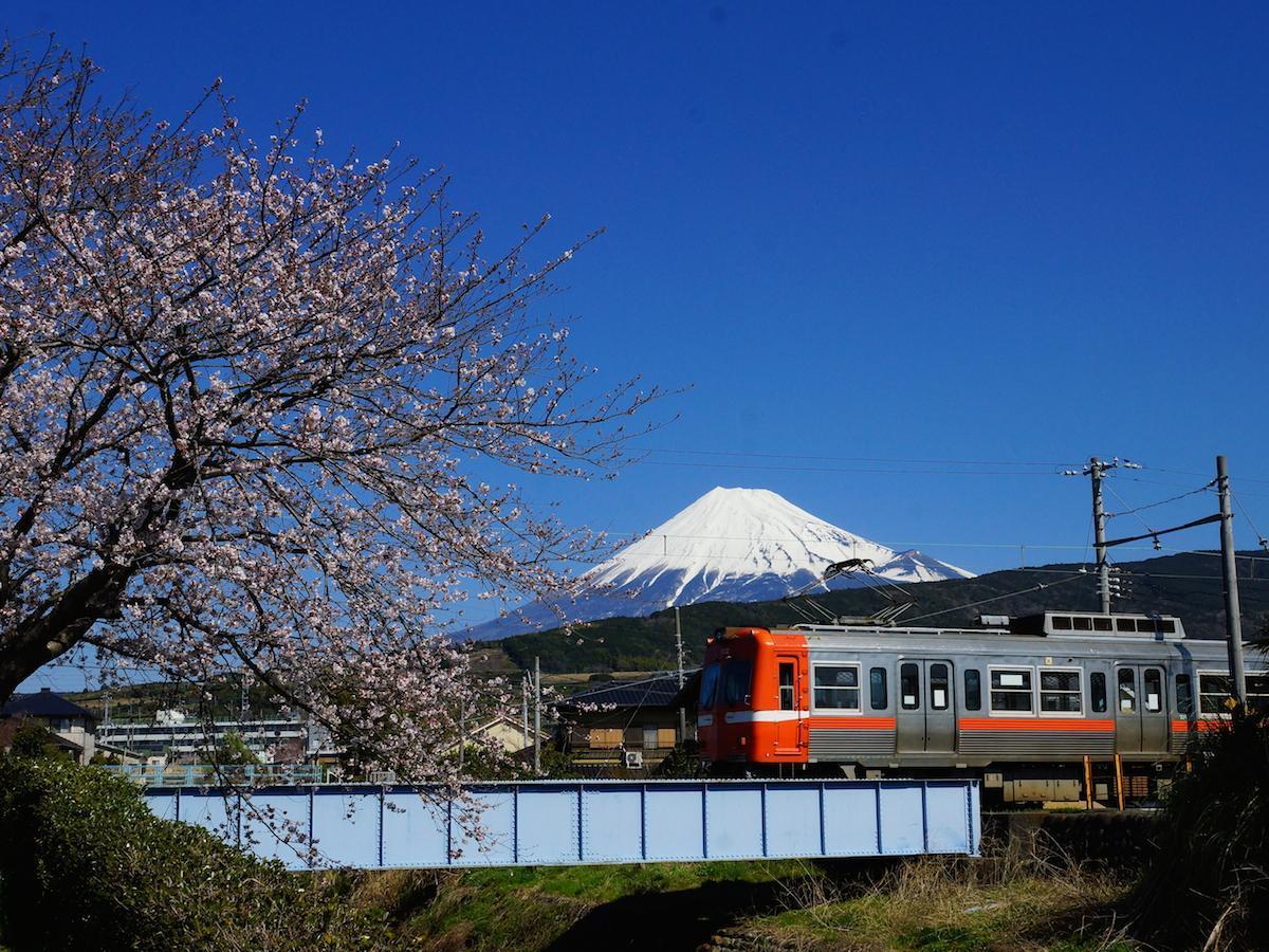 桜と富士山と岳南電車