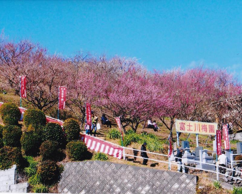 宗清寺「梅まつり」過去開催時の様子