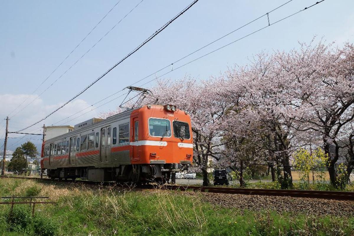 岳南電車と桜(過去の様子)