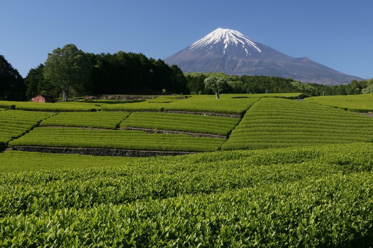 富士市から見る富士山