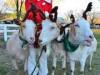 朝霧高原「まかいの牧場」でクリスマスイベント 動物パレードやイルミなど