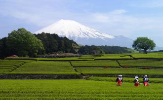 富士市が「富士市ほうじ茶宣言」 新ブランド「凛茶」も